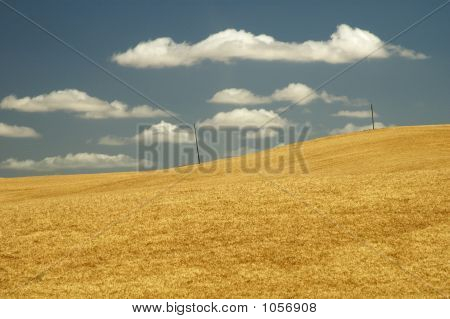 Wheat Field 13