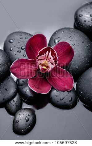 Red orchid with therapy stones