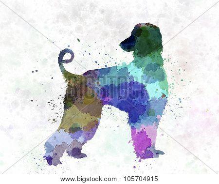 Afgan Hound 01 In Watercolor