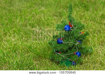 Christmas Tree On The Lawn