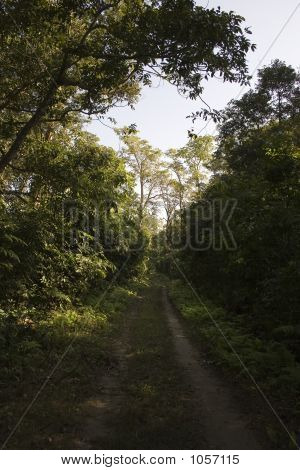 Chitwan Nationalpark - Nepal