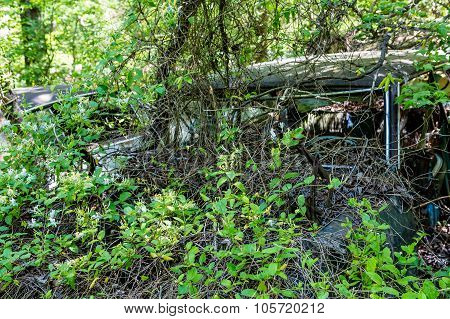 Wrecked Car Covered In Vines