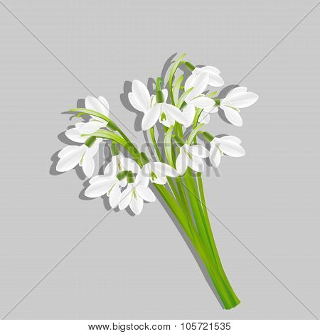 Bouquet of snowdrops isolated on grey background