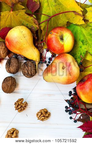 Kernel Shelled Walnuts, Ripe Pears And Apples In The Background Autumn Yellow And Red Leaves