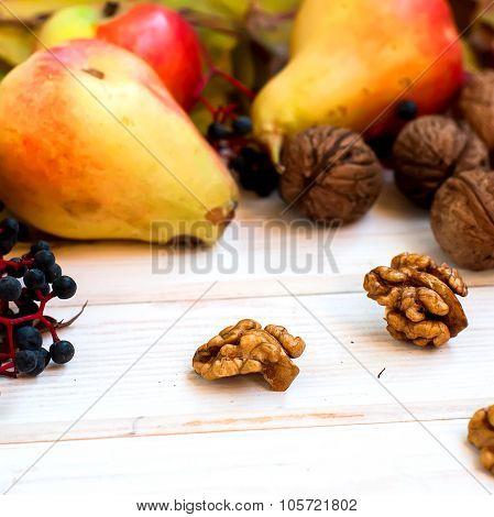 Harvest - Nuts, Apples, Pears