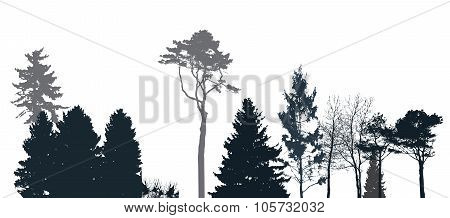 Image of Nature. Tree Silhouette. Eco banner. Vector Illustration.