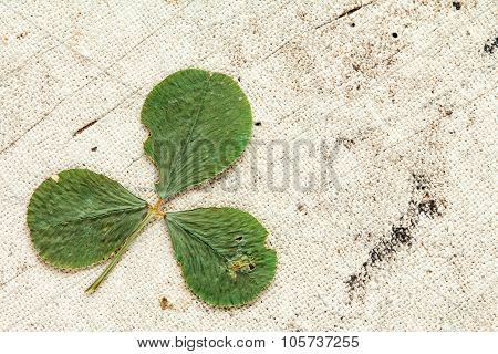 Dry Clover With Copy-space