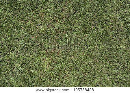 Hedge Background