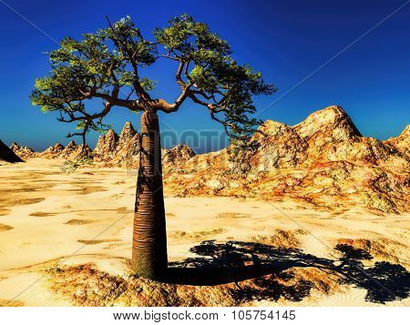 Rocky desert with single tree- baobab