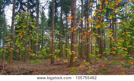Colorful autum nature forest
