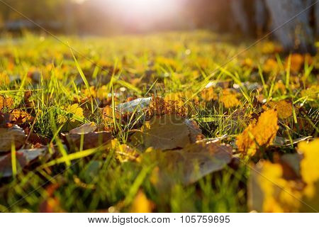 Natural Background With Green Grass And Yellow Leaves.
