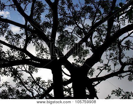 Dark, Black Shadow Of Huge Tree, Awful Halloween Background