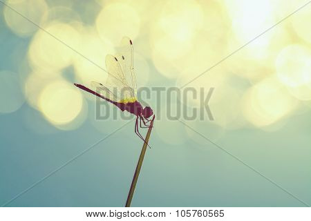 Vintage Silhouette Photography With Dragonfly And Blur Bokeh Background, Beautiful Closeup Silhouett