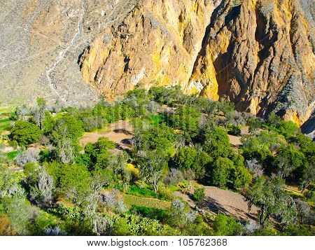 Green oasis on the bottom of Colca Canyon in Peru