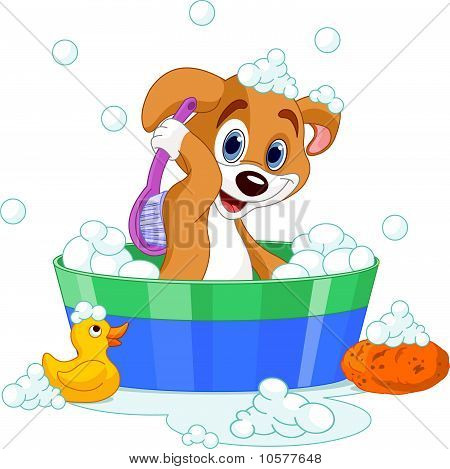 Dog Having A  Bath