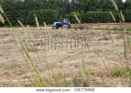 Mown Meadow Farmland, Haying, Tractor Hay Rake Making Windrows