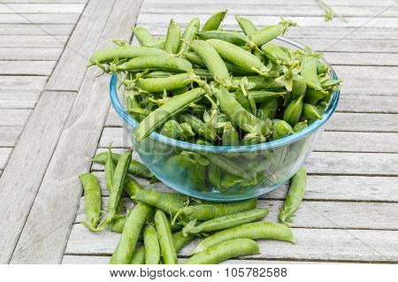 Freshly Picked Peas Stiil In Their  Peapods In A Bowl Waiting To Be Shelled