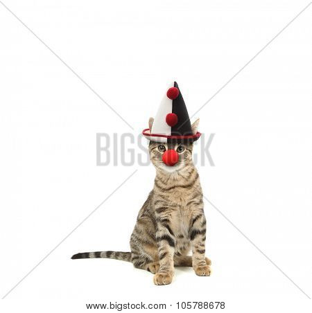 Bengal cat wearing a clown hat and nose