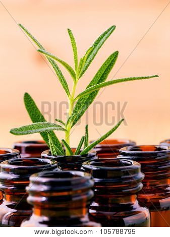 Natural Spa Ingredients Rosemary Essential Oil For Aromatherapy Shallow Depth Of Field .