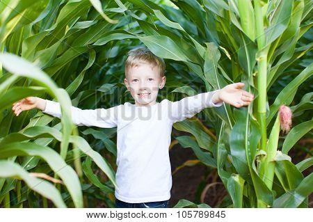 Kid In Corn Maze