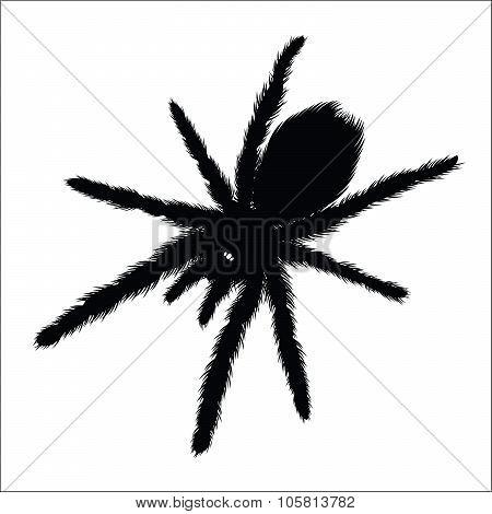Big Spider silhouette