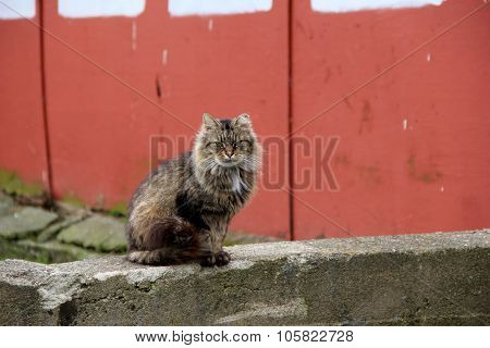 Sullen-looking barn cat on stone wall