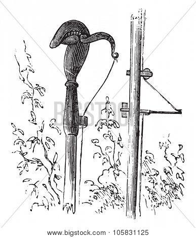 Pruning, vintage engraved illustration.