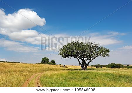 Tree In Savannah