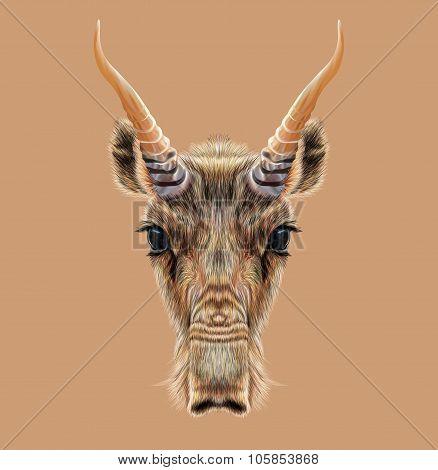 Illustrated Portrait of Saiga antelope