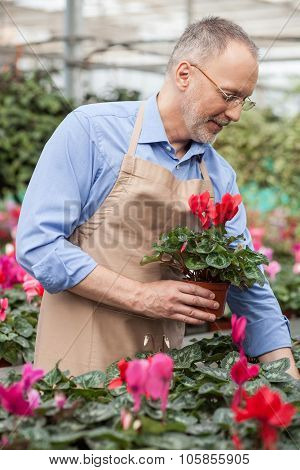 Professional shop assistant is working at greenhouse