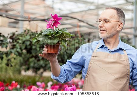 Skillful senior garden worker at plant nursery