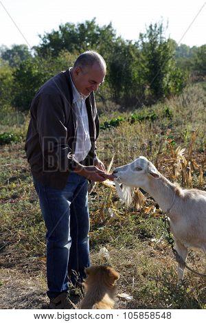 Man Feeding A Goat