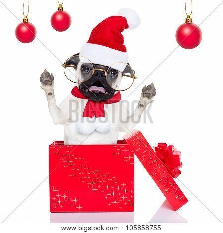 Christmas Surprise Dog