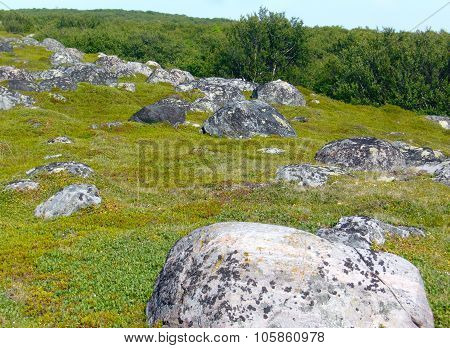 Stones in the landscape