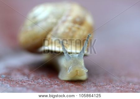Small snail gliding, very short depth of focus.