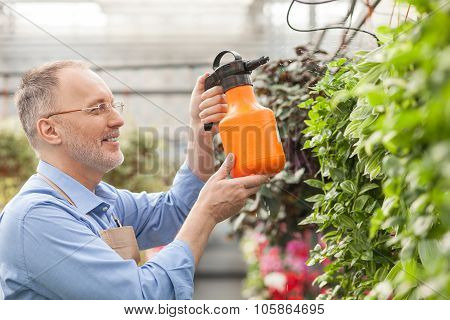 Skillful old gardener is pouring flowerpots at greenhouse