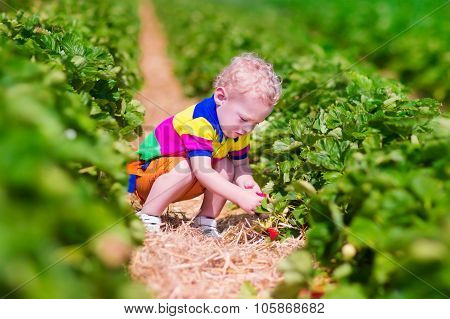 Child Picking Fresh Strawberry On A Farm