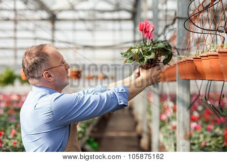 Cheerful old garden worker is planting vegetation
