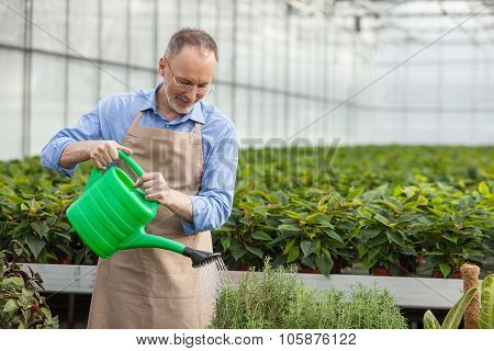Cheerful senior garden worker is pouring water on vegetation