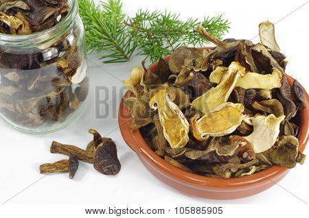 Dry Boletus