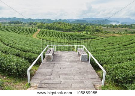 Viewpoint Tea Plantations