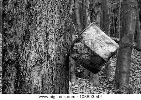 Bucket And Tree
