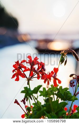 Flowers Illuminated By Sunlight At Dawn Over River