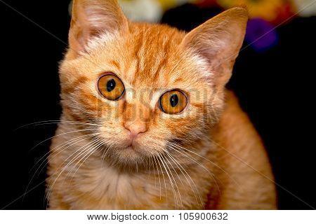 Cute Kitten with surprised look