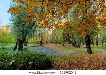 Autumn Landscape With Deciduous Trees