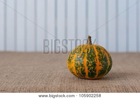Green and orange striped pumpkin on white wooden backgraund, copy space for text
