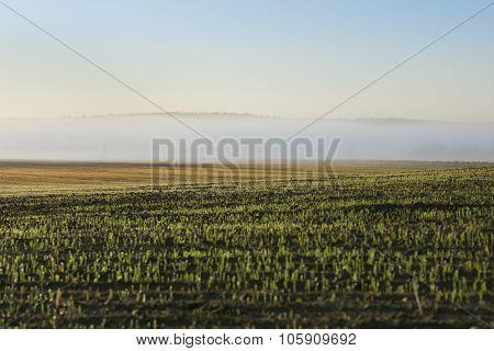 Misty Morning Landscape In Poland