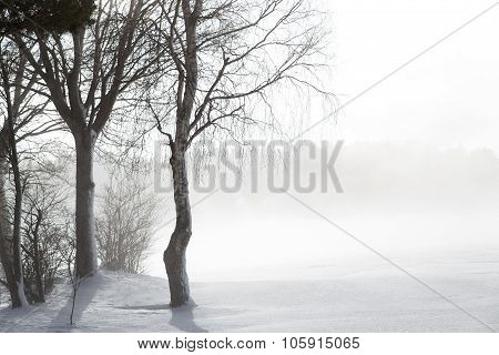 Icy Trees In The Snow With Nascen Fog