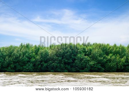 Beautiful Mangrove