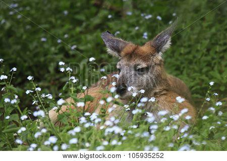 Kangaroo Resting On Grass